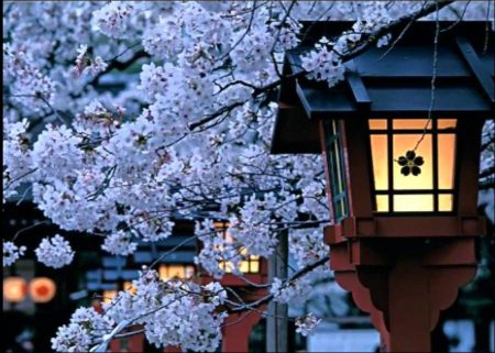 Japanese Environment