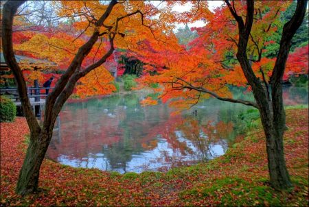 Kyoto Landscape Gardens – bonsai, bonkei, bonseki